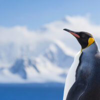 【9月23日実施】ペンギンアップデート4.0により被リンクスパムは駆逐されるのか?